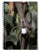Wolf Spider With Egg Sac Spiral Notebook
