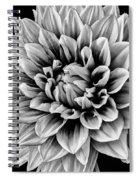 Wonderful Graphic Dahlia Spiral Notebook