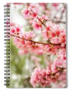 Wonderful Pink Cherry Blossoms At Floriade Spiral Notebook