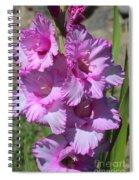 Wonderful Pink Gladiolus Spiral Notebook
