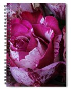 Wonderful Pink Red Rose Spiral Notebook