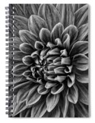 Wonderful Tones Dramantic Dahlia Spiral Notebook