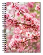 Wonderfully Delicate Pink Cherry Blossoms At Canberra's Floriade Spiral Notebook