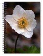 Wood Anemone 1 Spiral Notebook