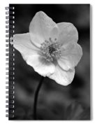 Wood Anemone 6 Spiral Notebook