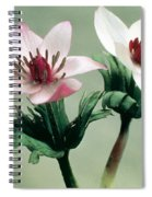 Wood Anemone Spiral Notebook