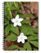 Wood Anemone Blooming Spiral Notebook