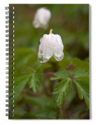 Wood Anemone Heavy From The Rain Spiral Notebook