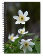 Wood Anemone  Spiral Notebook