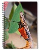 Wood Beetle Exploring Spiral Notebook