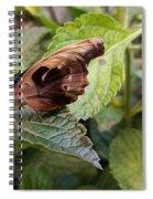 Wood Butterfly Spiral Notebook