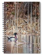 Wood Duck Drake 2018 Spiral Notebook