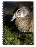 Wood Duck Female Spiral Notebook