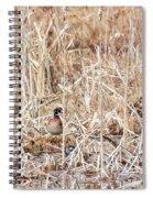 Wood Duck Mates 2018 Spiral Notebook