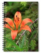 Wood Lily Also Called Prairie Lily Or Western Red Lily Spiral Notebook