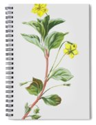 Wood Loosestrife Spiral Notebook