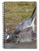 Wood Pigeon Washing Spiral Notebook