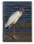 Wood Stork In The Final Light Of Day Spiral Notebook