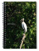 Wood Stork-out On A Limb Spiral Notebook