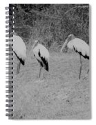 Wood Storks By The Water's Edge Spiral Notebook