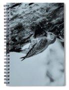 Woodpecker - El Salvador Spiral Notebook