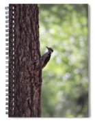 Woodpecker In New Mexico Spiral Notebook