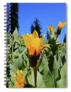 Woolly Mule's-ear At Lassen Park Spiral Notebook