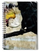 Wreathed Hornbill Perching Against Vintage Concrete Wall Backgro Spiral Notebook