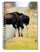 Amorous Moose Wrestling Spiral Notebook