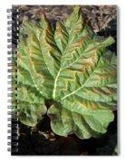 Wrinkled Green Rhubarb Leaf Spiral Notebook