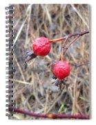 Wrinkled Wild Rose Hips Spiral Notebook