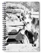 Wwi, Nell British Messenger Dog Spiral Notebook