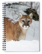 Wyoming Wild Cat Spiral Notebook