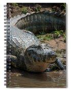Yacare Caiman On Grassy Beach Eyeing Camera Spiral Notebook
