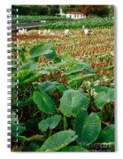 Yams Farm In Azores Spiral Notebook