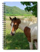 Yearling Colt In The Pasture Spiral Notebook