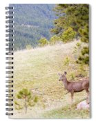 Yearling Mule Deer In The Pike National Forest Spiral Notebook