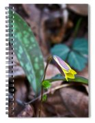Yelllow Trout Lily 1 Spiral Notebook