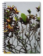 Yellogreen  Spiral Notebook