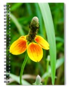 Yellow And Orange Clasping Coneflower Spiral Notebook