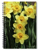 Yellow And Orange Daffodil  #2 Spiral Notebook