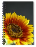 Yellow And Orange Gerber Spiral Notebook