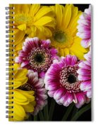 Yellow And Pink Gerbera Daisies Spiral Notebook