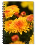 Yellow And Red Autumn Mums Closeup I Spiral Notebook