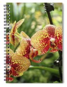 Yellow And Red Spotted Phalaenopsis Orchids Spiral Notebook