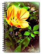 Yellow And Red Tulip Spiral Notebook