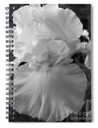 Yellow And White Iris In Bw Spiral Notebook