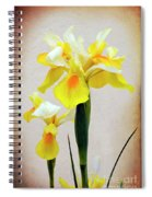 Yellow And White Iris Textured Spiral Notebook