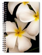 Yellow And White Plumeria Spiral Notebook
