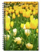Yellow And White Tulips In Canberra In Spring Spiral Notebook